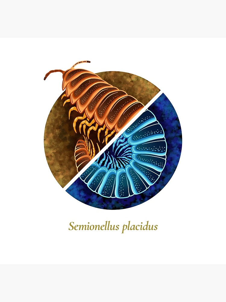 The Circles of Life: Semionellus placidus by franzanth