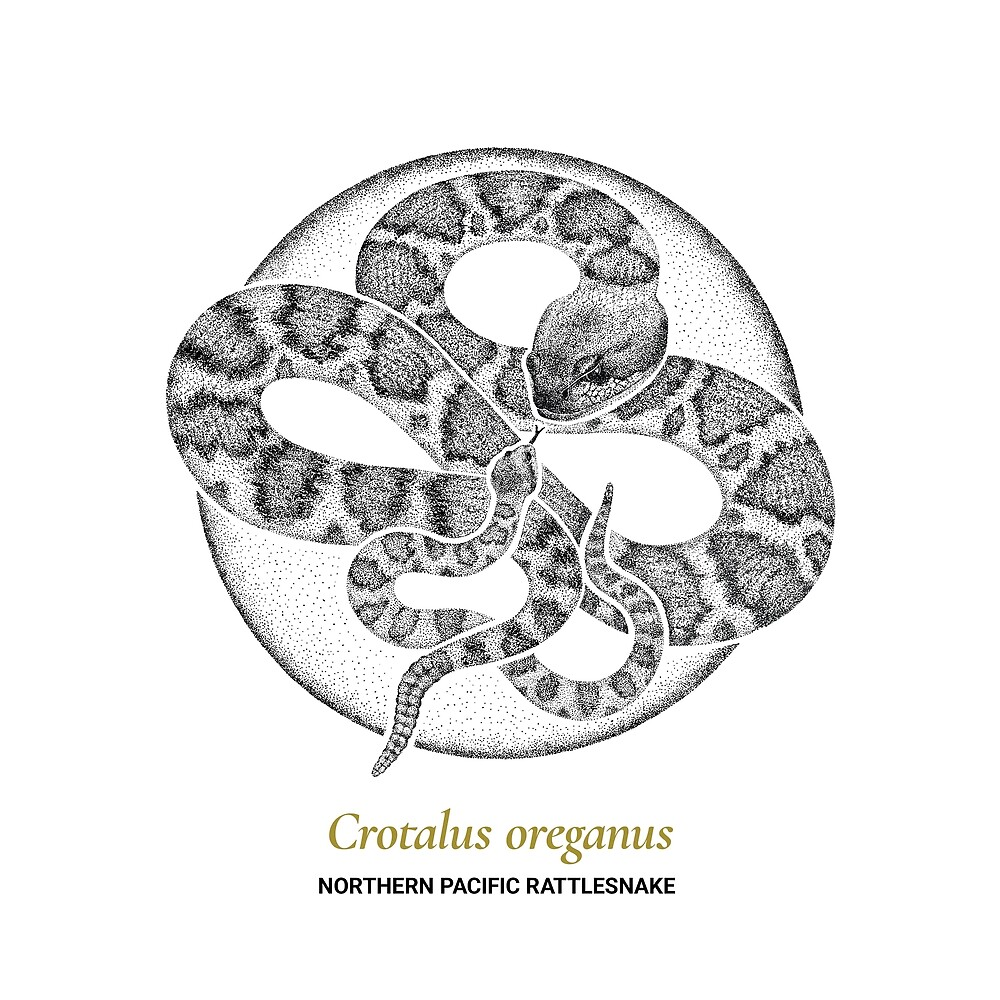 The Circles of Life: Northern Pacific Rattlesnake by Franz Anthony