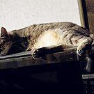 Lazy Monday by edwardiangirl