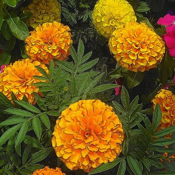 Marigold Garden by bloomingvine