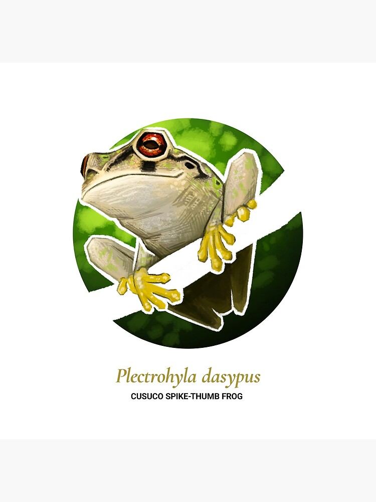 The Circles of Life: Cusuco Spike-thumb Frog by franzanth