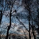 sunset, rowantree woods by codaimages