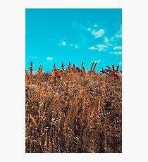 bushes Photographic Print