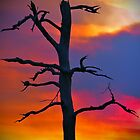 Dead Tree Against Colorful Sky by StampCity