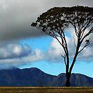 Stirling Range by Eve Parry