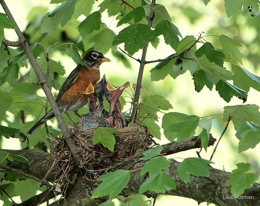 American Robin Family by Lisa G. Putman