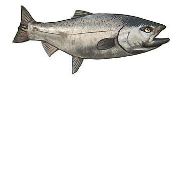 Salmon   Salmon Fishing   Alaska Fishing by blueshore