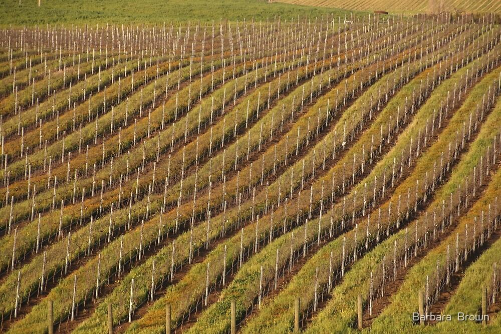 Vineyard Pattern by Barbara  Brown