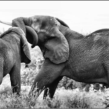 JUST HAVING FUN! THE AFRICAN ELEPHANT – Loxodonta Africana - AFRIKA OLIFANT by mags