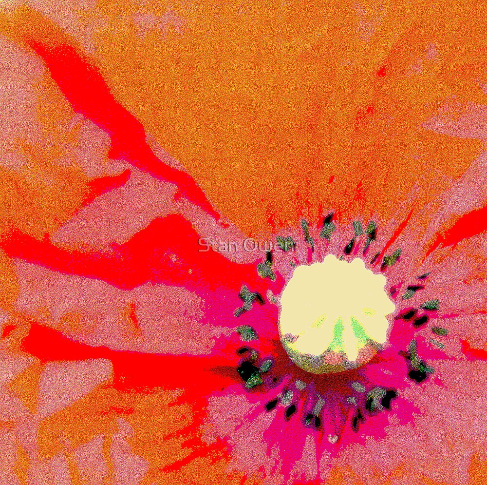 Poppy by Stan Owen