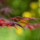 Nature in Profile by Amanda White