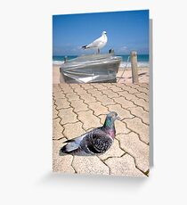 Seagull and Pigeon Greeting Card