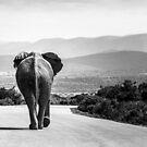 Elephant taking a stroll by Carmen de Bruijn