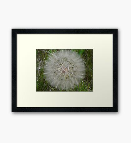 White Fluff Ball Framed Print