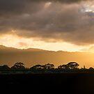 Hawaiian Sunset - Golden Glow Behind Waianae Mountain Range by Georgia Mizuleva