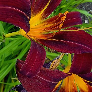 Tigerlily Close Up by bloomingvine