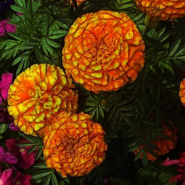 Large Marigolds by bloomingvine
