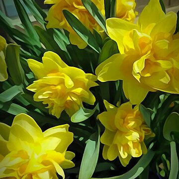 Bright Yellow Daffodils by bloomingvine