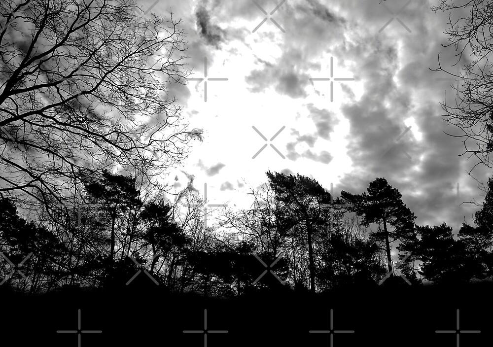 Samhain Forest  von Christine Krahl