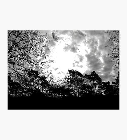 Samhain Forest  Fotodruck