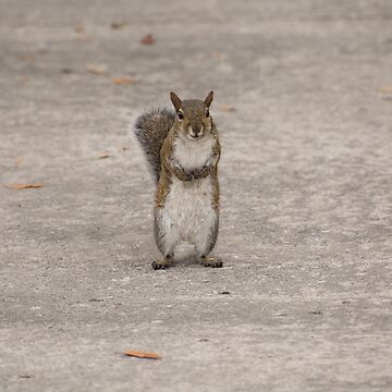 Do You Have Some Nuts? by ZinaStromberg