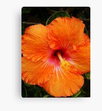 Vibrant Orange Hibiscus Canvas Print