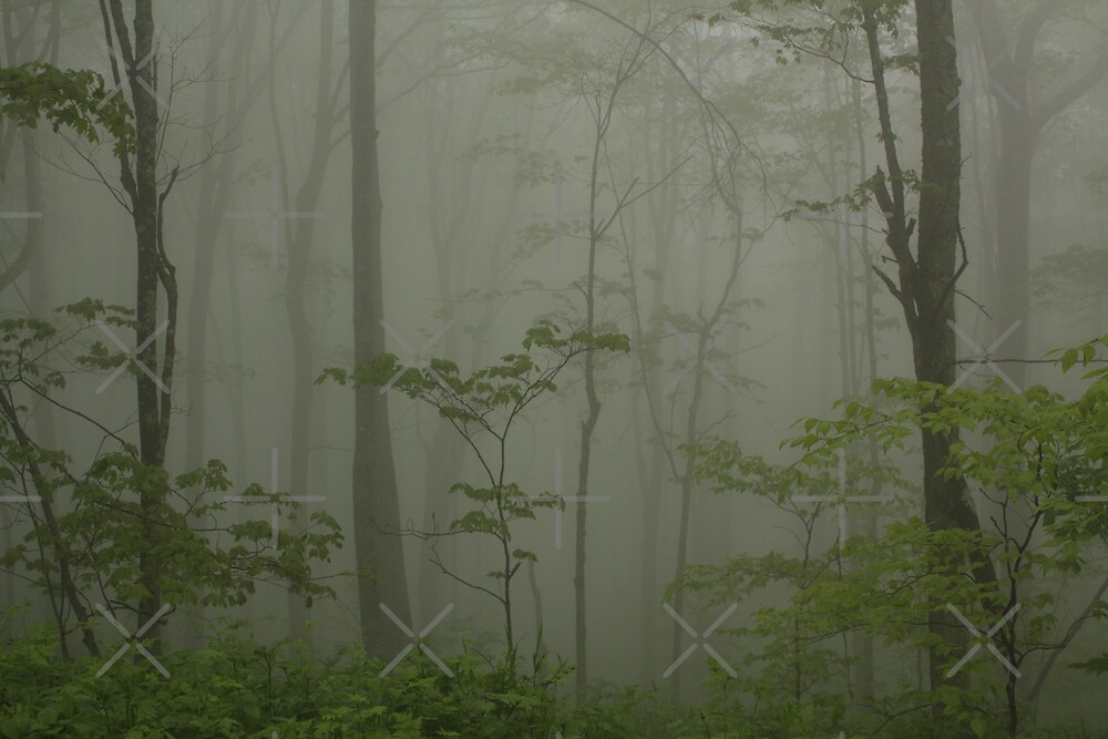 """""""...Through the Veil of Mist."""" by Linda Costello Hinchey"""
