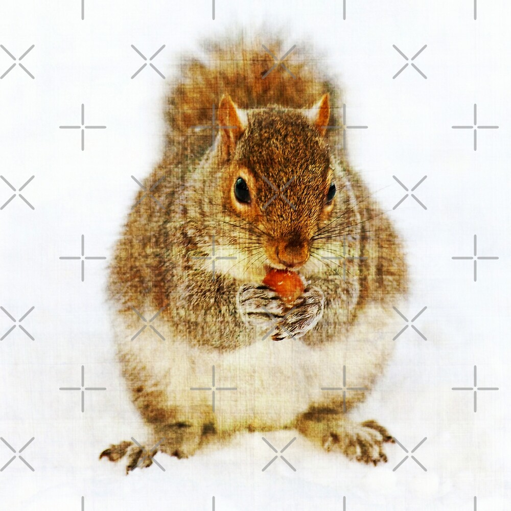 Squirrel with an Acorn by FrankieCat