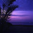 Palm tree on beach Ibiza silhouette against dusk sunset sky square medium format film analogue photos by edwardolive
