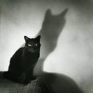 Portrait of black cat on sofa film noir chiaro scuro black and white square silver gelatin film analog photo by edwardolive