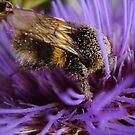 Honey, Honey... by tonymm6491