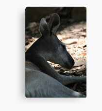 Portrait of a Roo Canvas Print