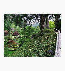 Sunken Garden No.4 Photographic Print