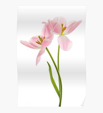 Tulip Duet Poster