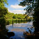 Bosherston Reflections  by Stephen Peters