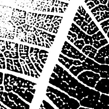 black and white leaf pattern by chardo55
