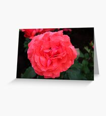 Fragrant Cloud Greeting Card