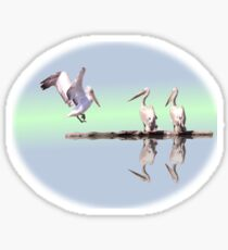Crested pelicans Sticker
