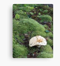 'Shroom Study No.1 Canvas Print