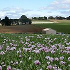 Poppy Farm, Table Cape, Tasmania, Australia. by kaysharp