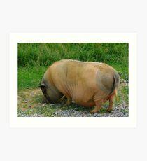 Pot-Bellied Pig Art Print