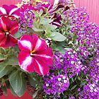 Petunias and Sweet Alyssum by James Brotherton