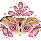 Antherina suraka Silk Moth Saturniidae by Wieskunde