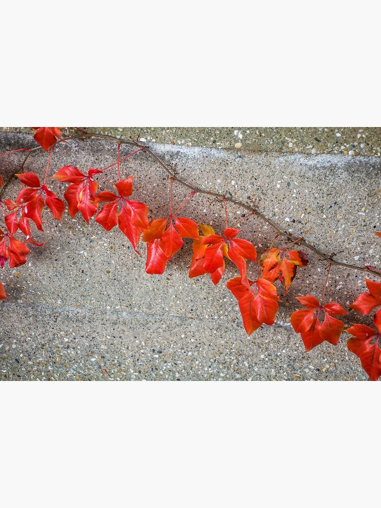 Bright autumn leaves by tdphotogifts