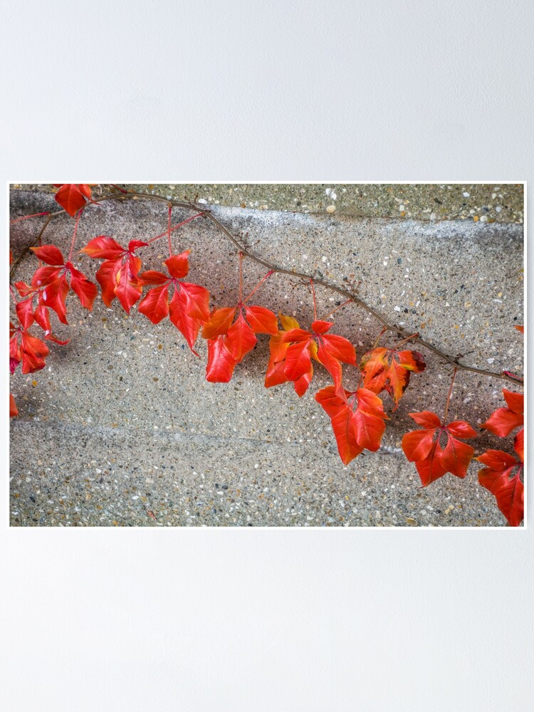 Alternate view of Bright autumn leaves Poster