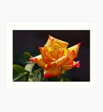 Tinta Rosa Art Print
