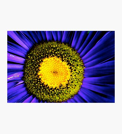 Spring colours Photographic Print
