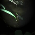 dragonfly series by kathie