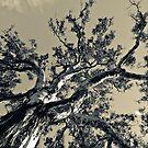 Arterial (Silver) by randmphotos