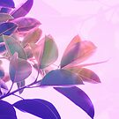Elegant Tropical Rubber Foliage 1 - Pink and purple by Dominiquevari